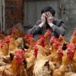 Mare atenție la gripa aviară. Spălați-vă des pe mâini!