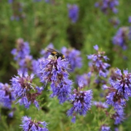 Cum contribuie plantele la întărirea sistemului imunitar