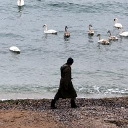 Zeci de cazuri de gripă aviară la Constanţa. Prefectura a activat Centrul Local de Combatere a Bolilor la animale
