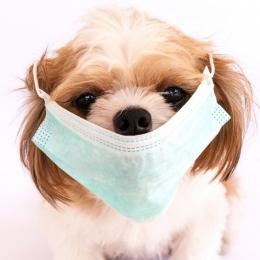 Febră sau frisoane? Să nu aveți leptospiroză…