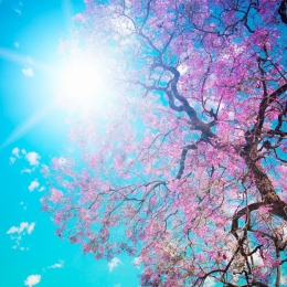Astăzi sărbătorim echinocţiul de primăvară. 4 sfaturi pentru un nou început